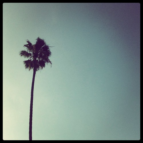 Palm Insta