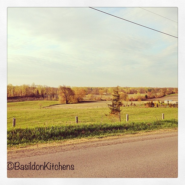 May 3 - this is really good {spring has finally arrived} #fmsphotoaday #spring #princeedwardcounty