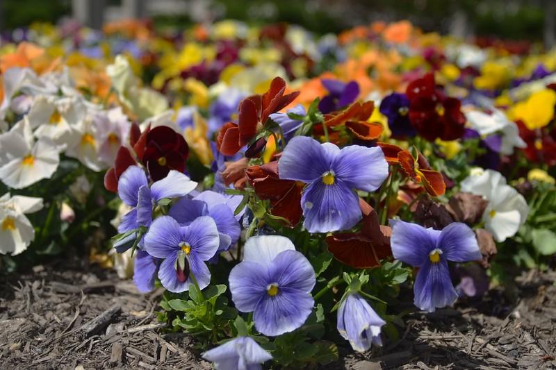 Flower Bohak