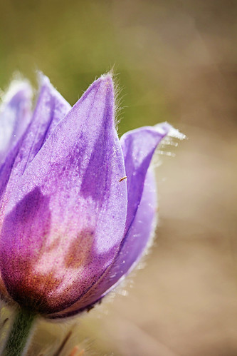 May 4, 2013. Crocus