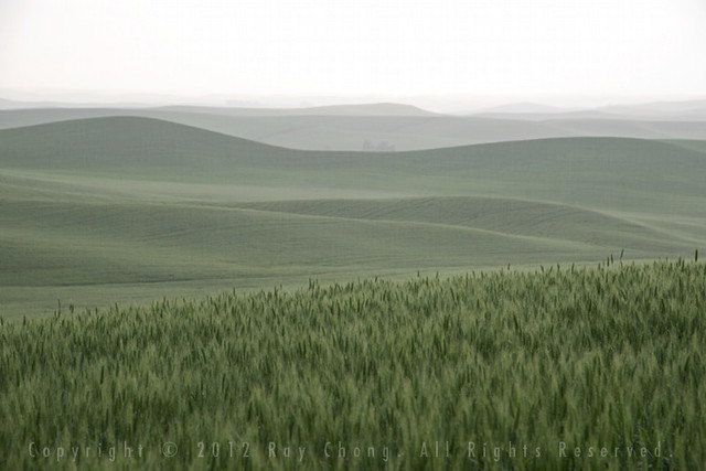 Palouse in the Rain