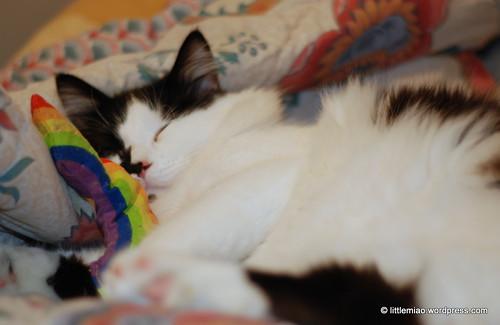 rainbow sprock 5-2-2012 8-49-27 PM