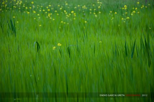 YELLOW SPOTS ON GREEN