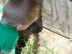 DSC00011looking at baby bunnies