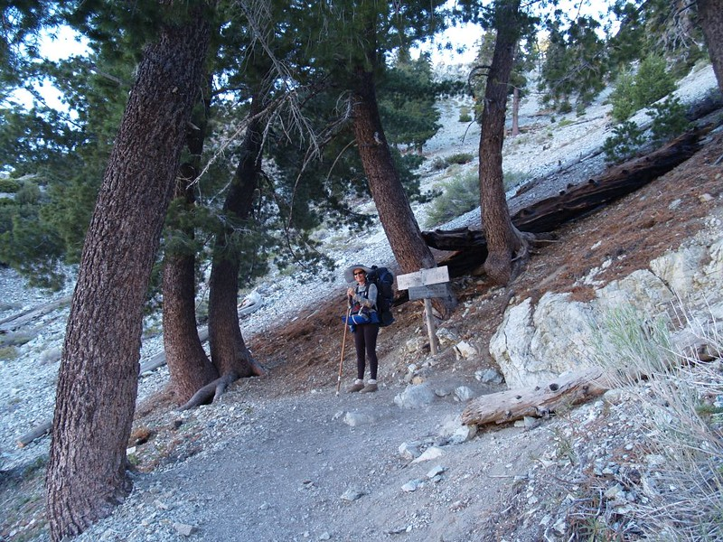 Where the Chapman Trail intersects the Icehouse Canyon Trail near Icehouse Saddle