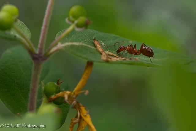 2012_May_23_Bugs_047