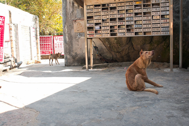 Dogs at the street 2