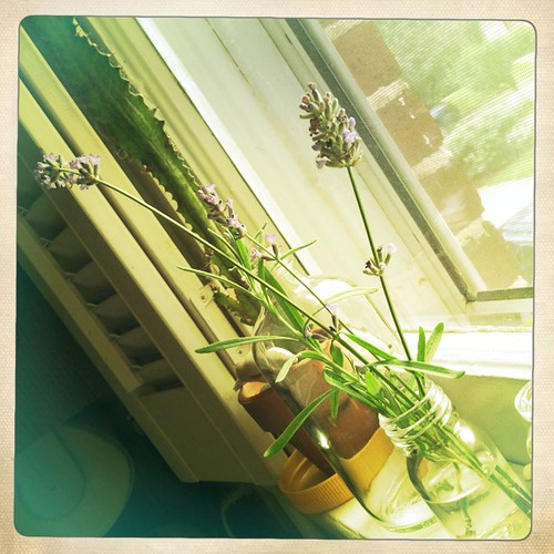 lavender in the windowsill
