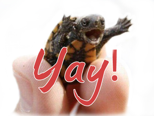 turtle yay flickr photo sharing