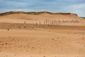 Beach Stakes