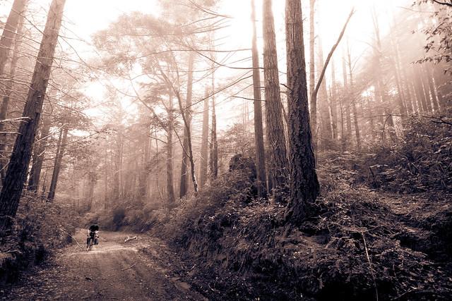 Usal Road downhill