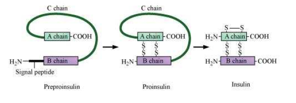 Biotechnology and its Applications