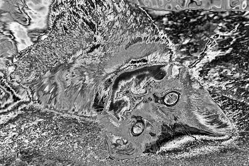 scampi-lTopaz-iquidchrome-w