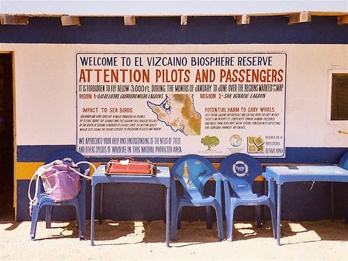 2008.LagunaSanIgnacio.Baja.1