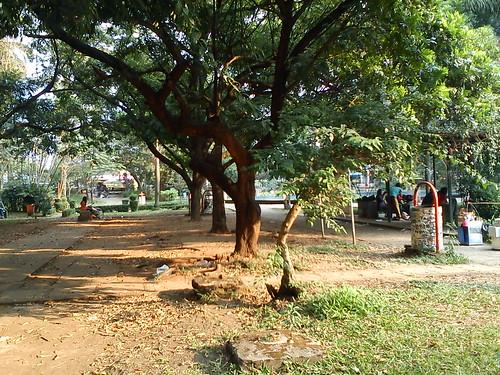 Dry Season at the Park