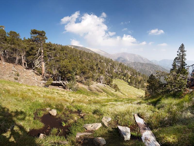 High Meadow Springs