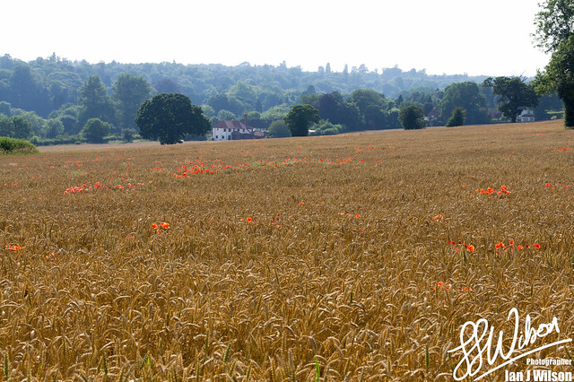 Countryside – Daily Photo (4th August 2012)