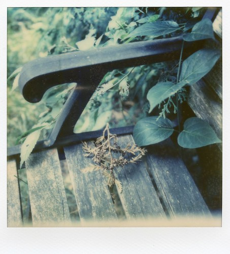 First successful image from my SX-70