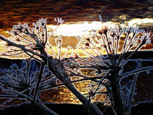 wild fennel sunset-glowing edge filter copy
