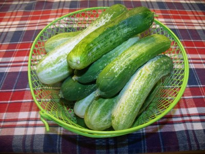 pickle and can cucumbers