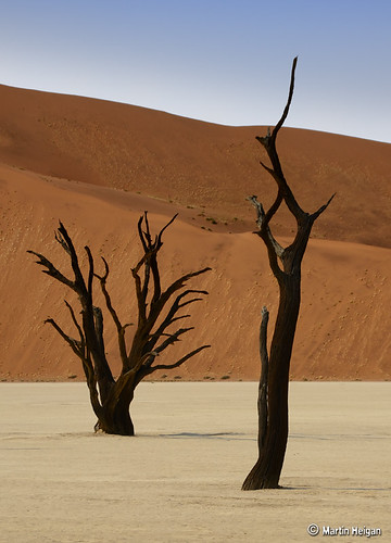 Dead Vlei Camel Thorn Trees by Martin_Heigan