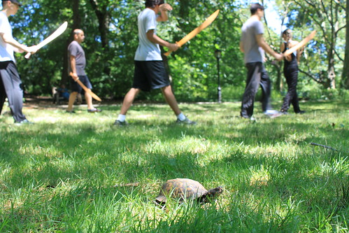 New York - Central Park - Box Turtle with Thad's Class