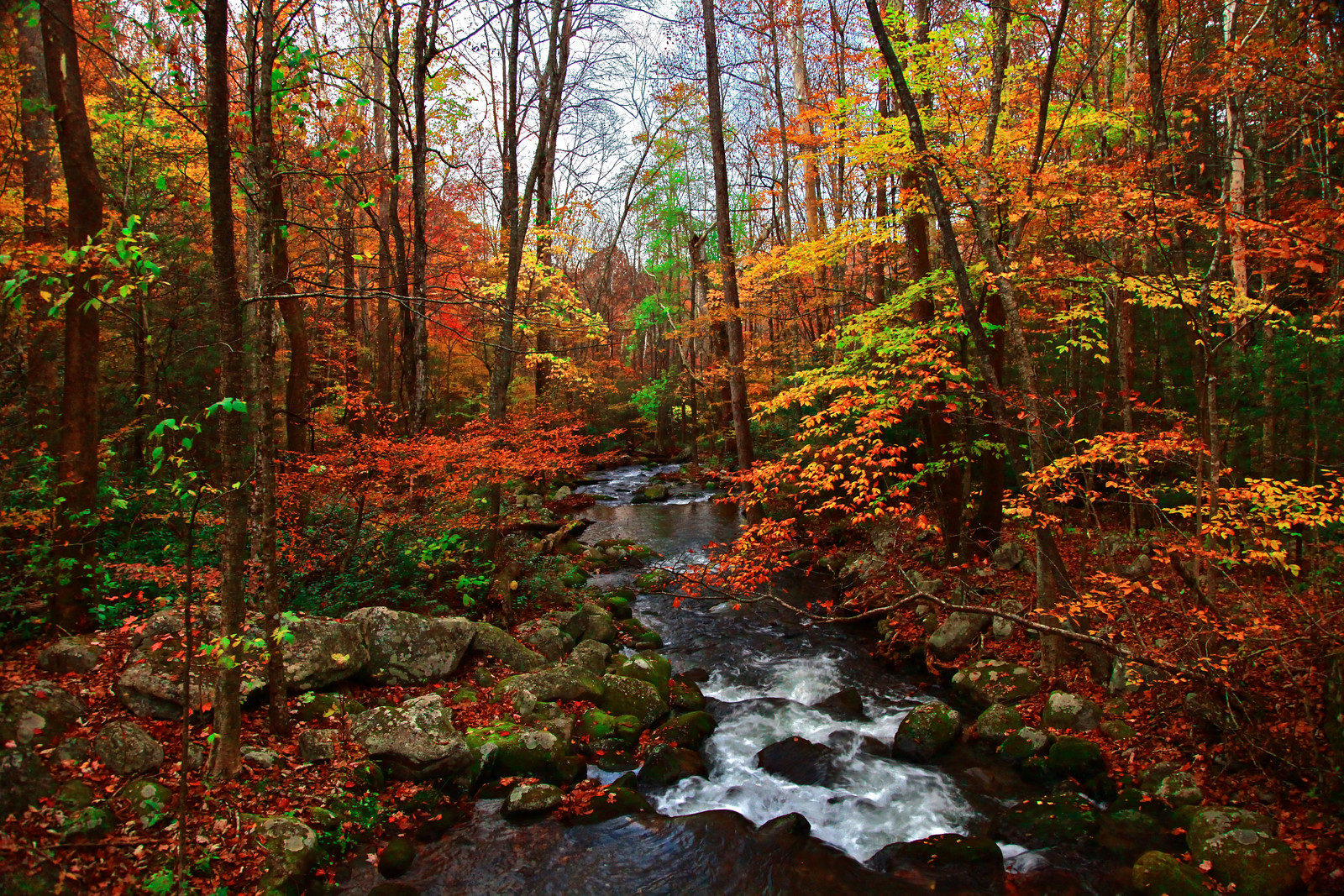 Fall Creek in the Great Smoky Mountains National Park - JoeyBLS Photography