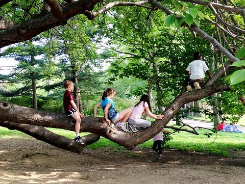 traffic jam of children on a tree branch