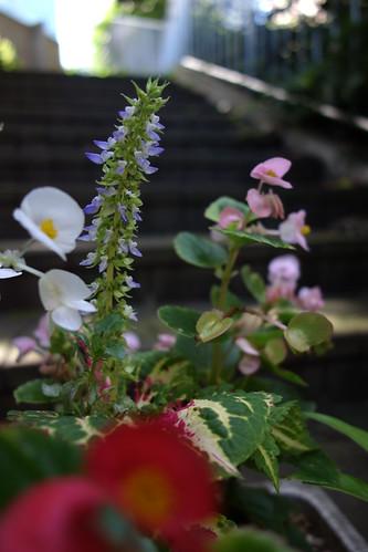 細長いなこの花