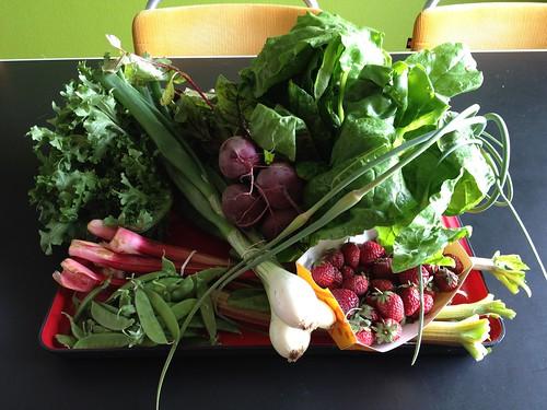 Amelishof organic CSA vegetables week 25, 2012