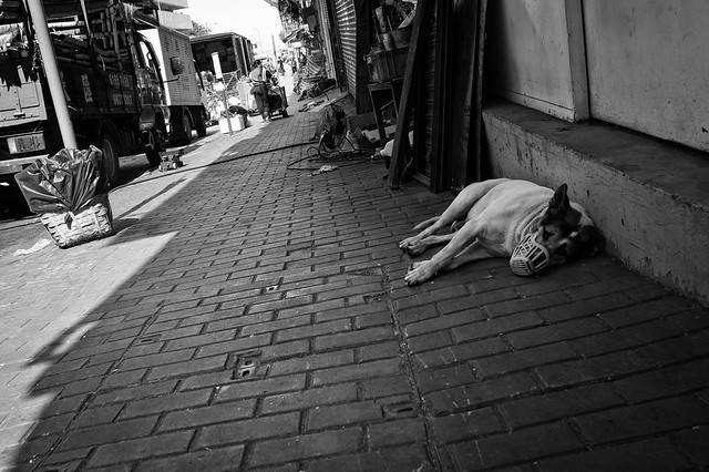 Dogs at the street 1