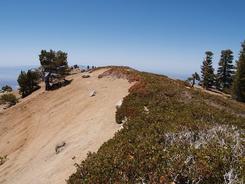 The true Cucamonga Peak Summit is on top of this misplaced sand dune not the rocks on the left