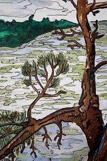 Bonsai detail - Lake Vermilion