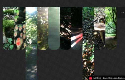Das Waldlog - ein kleines neues Fotoblog