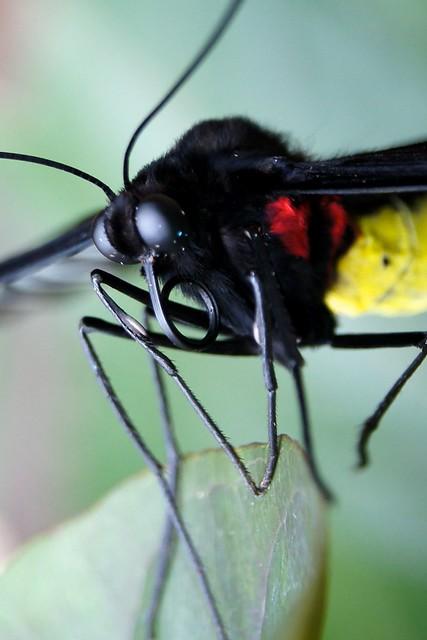 Bug Eyed