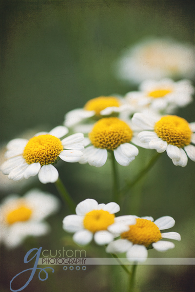 30 - floral 8