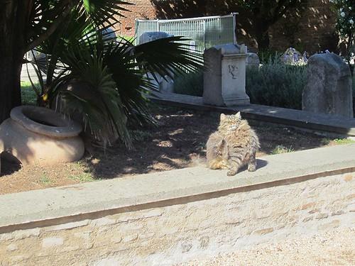 happy roman cat