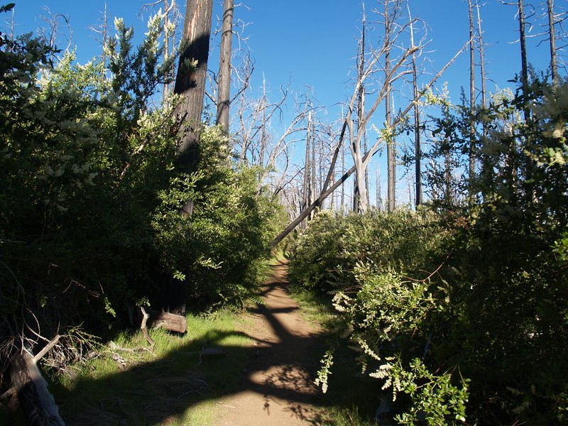 Dead Trees and the Impenetrable Thicket