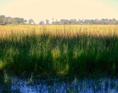 Moremi National Park  - Okavango Delta, Botswana