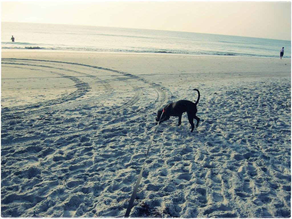 Petey's First Beach Day