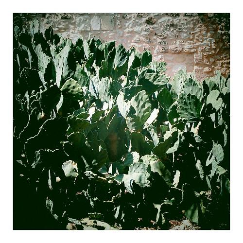 Friday foliage