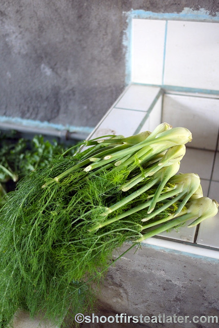 The Old Kano's farm- fennel fronds