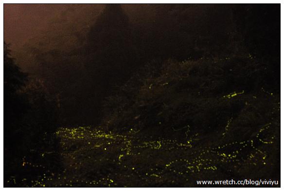 [內灣.旅遊]火金姑來照路~螢火蟲繁星點點 @VIVIYU小世界