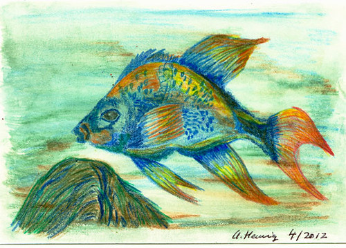 Fish - coloured pencils