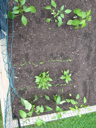 GardenWeek2 #4