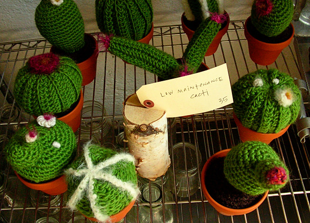 low maintenance cacti