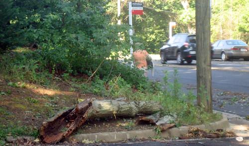 20120630 0803 - storm damage while yardsaleing - dangerous bus stop - IMG_4510