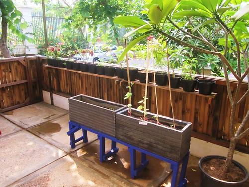 Mini-Garden