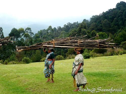 4. Women, forest, firewood, Kodaikanal