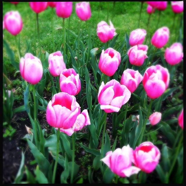 Spring in the Public Garden